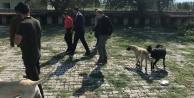 Başkan Akkuş, Hayvan Barınağını inceledi