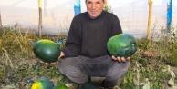 Iğdırlı çiftçi ninesinin sandığında altın değerinde tohum buldu