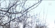 Iğdır'da koronavirüsü nedeniyle sokağa çıkamayan vatandaşın ağaçları ilaçlandı