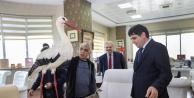 Türkoğlu Iğdır Üniversitesine Mumyalanmış Kuşlar Hediye Etti